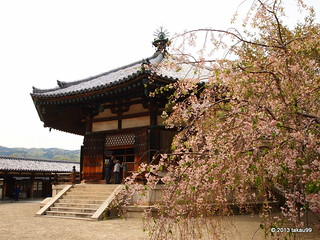 Cerry blossoms and the Temple