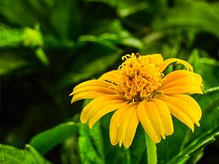 Tiny Yellow Flower