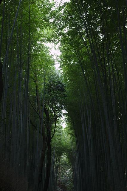 0820 - Arashiyama bosque bambú