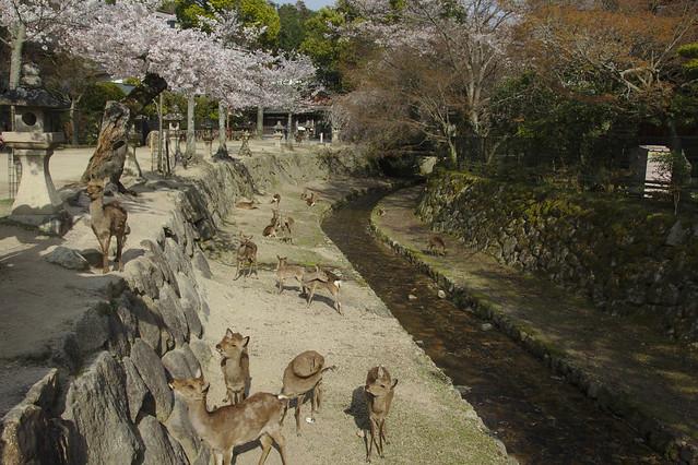 0934 - Isla de Miyajima