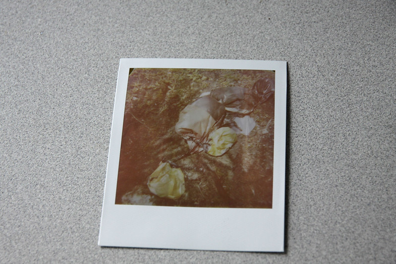 Crime Scene Mickey Polaroid