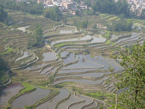 Yunnan13-Yuanyang 9 (3)