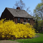 Balch House with Forsythia  The John Balch House 448 Cabot Street Beverly, Massachusetts  National Register of Historic Places NRHP #73000275  Balch House Built in 1636 by John Balch, who came over in 1623 with Captain Robert Gorges, the 'Old Planters' received this land in exchange for their settlement at Salem.  Source: Massachusetts Bay  Colony Tercentenary Commission