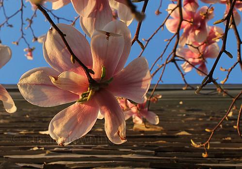 Barnside Blooms
