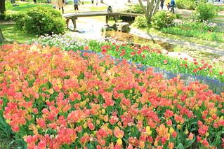 Tulip garden / チューリップとせせらぎ