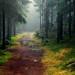 Troll forest II by Richard Larssen