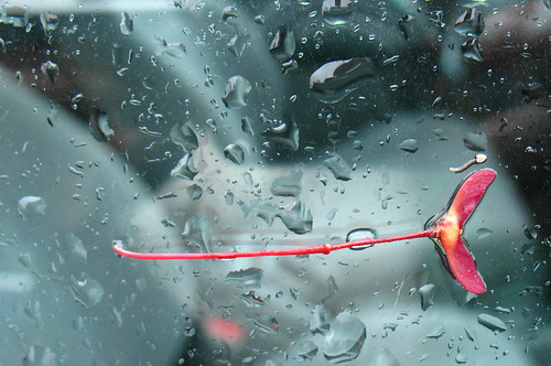 red maple fruit on a rainy car window