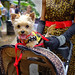One Very Happy Pup at Honfest in Baltimore by ` Toshio '