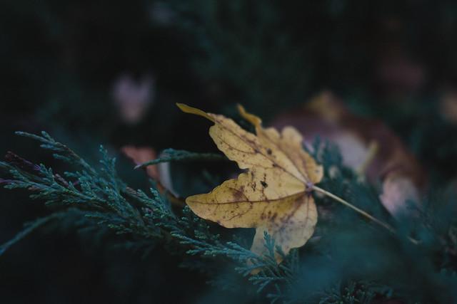 [235] Fallen Leaves
