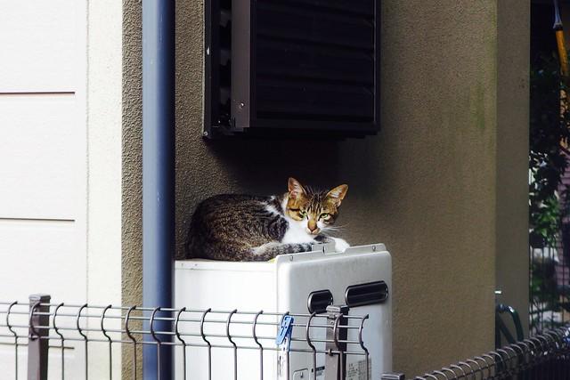 Today's Cat@2016-09-15