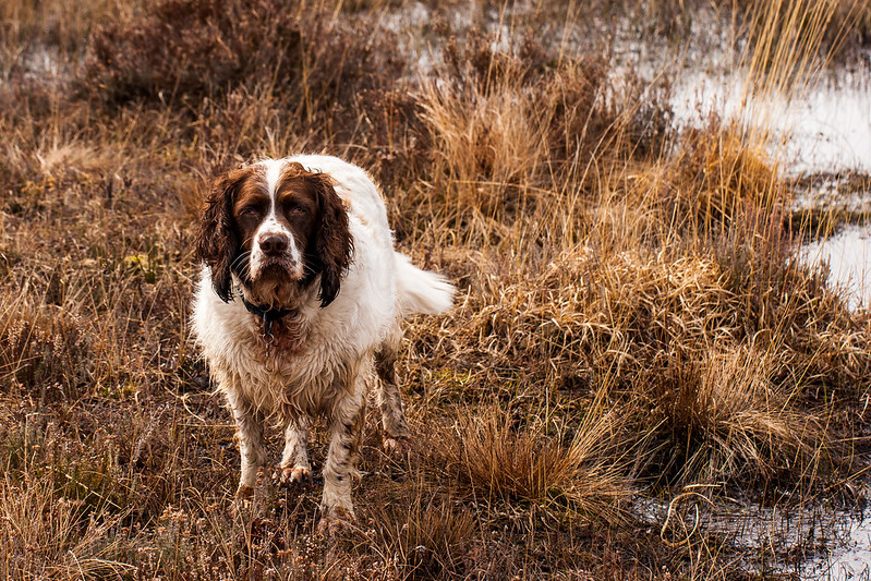 Max on Upton Heath