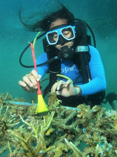 Diving in a coral nursery in Baler, Aurora Philippines