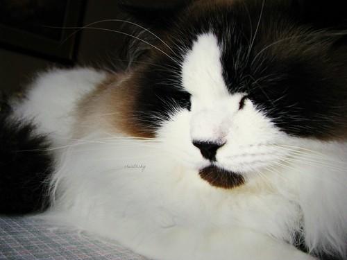 nap time by cherithsky