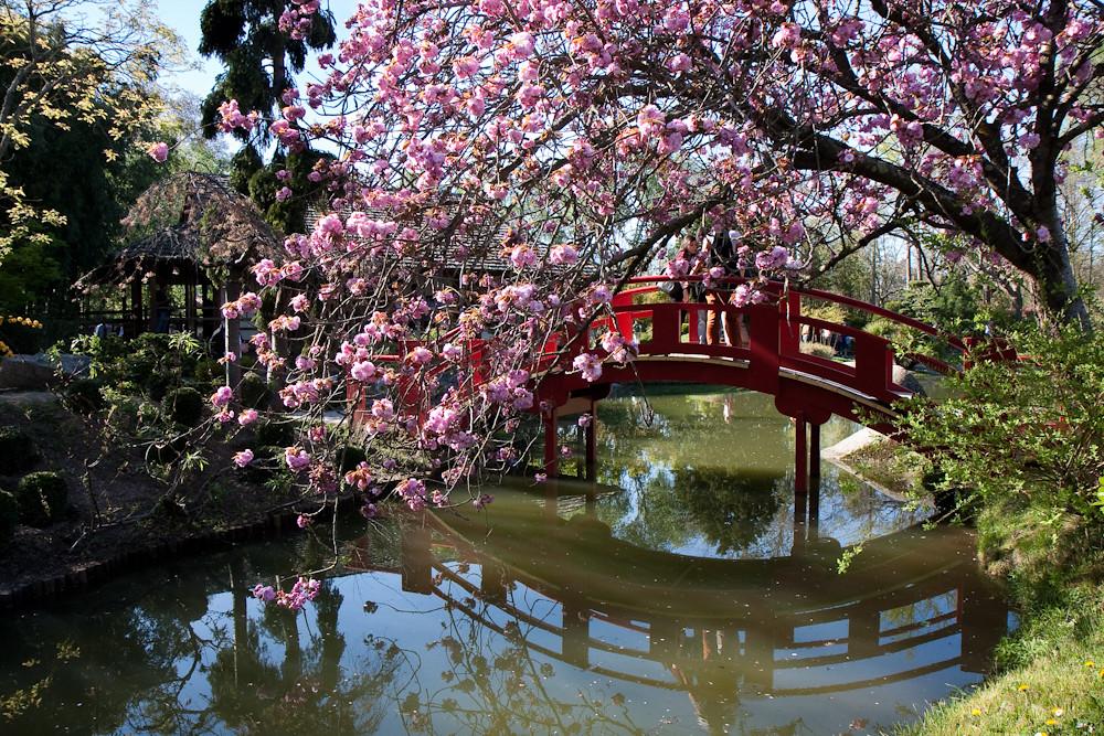 Jardin japonais#1 - Compans Caffarelli - Toulouse