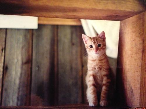 kitten 1998