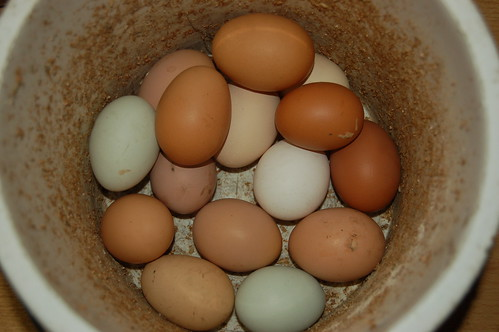 eggs Apr 13 2