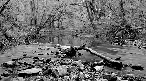 trees blackandwhite nature water georgia landscape streams creeks