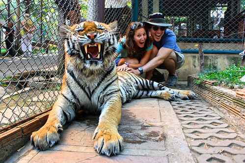 different tiger. not as scary as it looks though!
