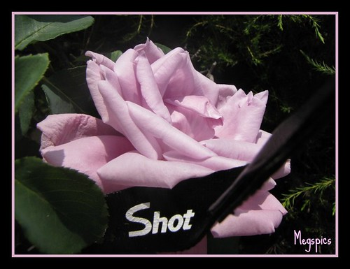 I shot the Rose!!