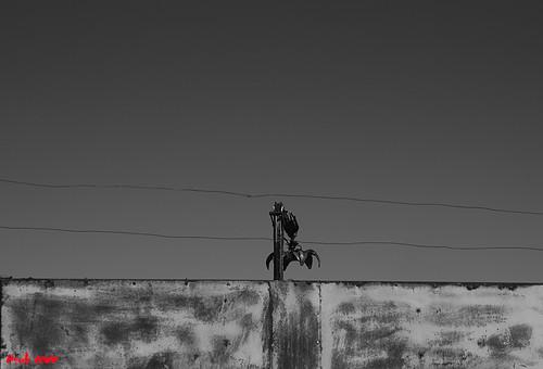 Ritual [2013] by FSUBF