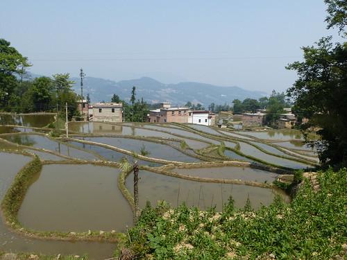 Yunnan13-Yuanyang 11(1)