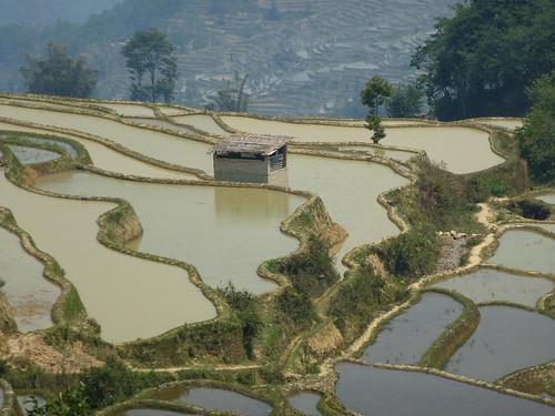 Yunnan13-Yuanyang 14 (4)
