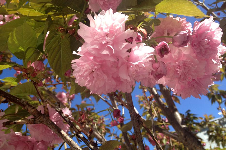 032013_spring