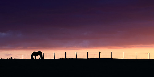 uk sunset horse silhouette landscape northumberland 6d northeastengland backworth