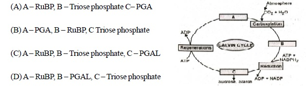 AIPMT Question Bank: Biology -  Photosynthesis