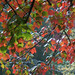 Autumn`s colors by allegra_