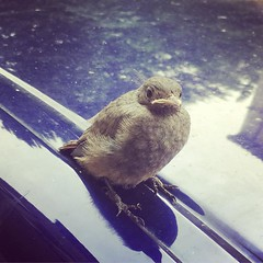 This little #birdie warns you to not mess with it. - Photo of Roquedur