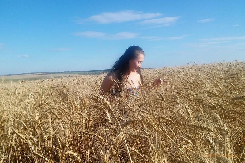 Ольга Якимчук_Золотая пшеница
