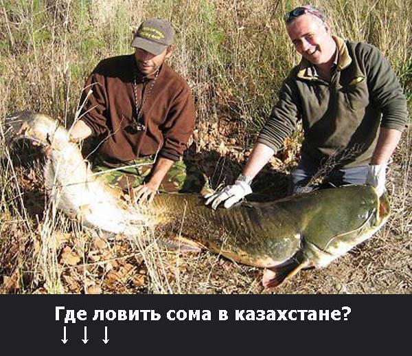Где ловить сома в казахстане?, Canon DIGITAL IXUS 55