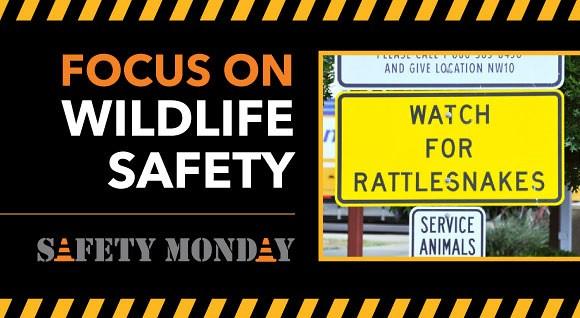 9.26.16 Wildlife Safety Hero