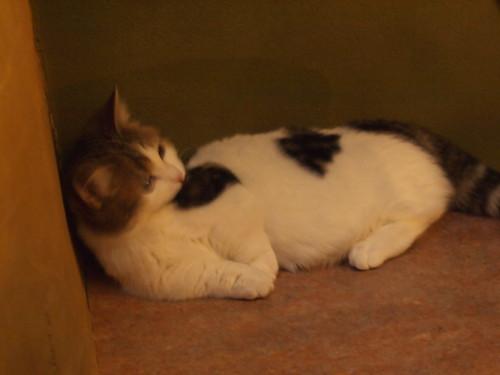 てまりのおうちの猫たち