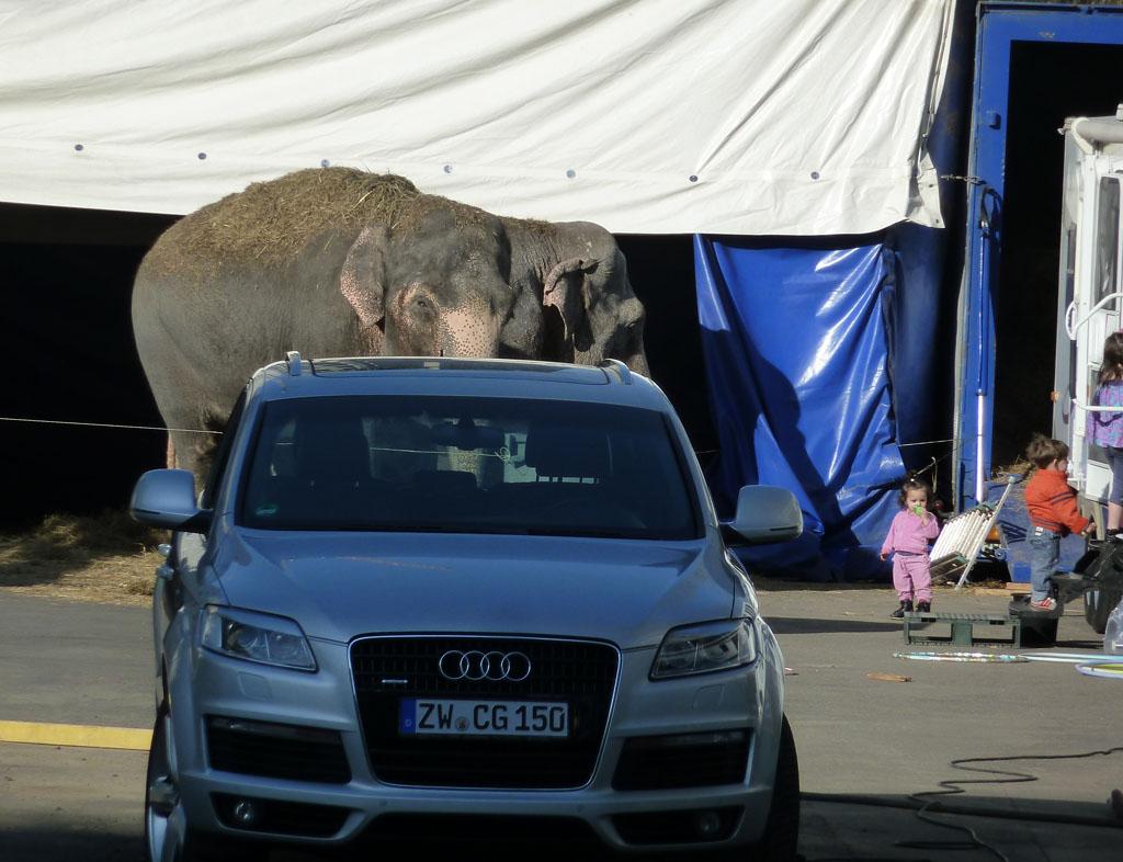 Минск 1 мая слон