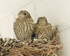 Little Finches May 25, 2013 #2 by br1078phot