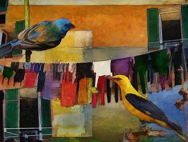 birds and clothesline