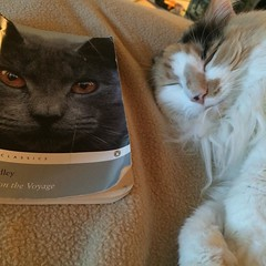 Zuzu approves of this assignment. #firstbookofthephd, #catsofinstagram, #booksofinstagram, #timothyfindley, #ecocriticism