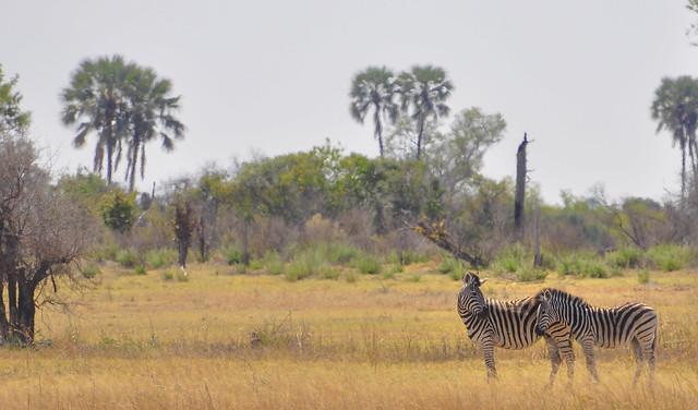 A Quiet Moment, Okavango Delta, Botswana