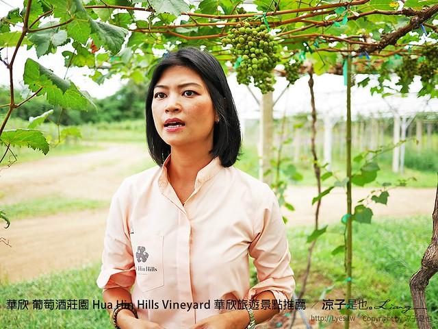 華欣 葡萄酒莊園 Hua Hin Hills Vineyard 華欣旅遊景點推薦 6