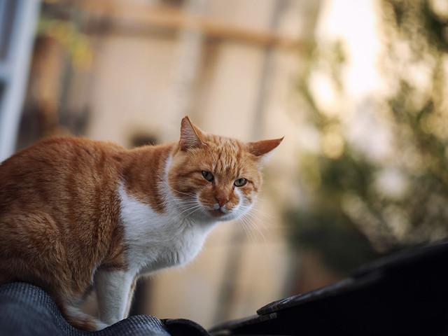 Street cat 170