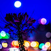 Under Moon Cleome Bloom Bokeh Lights by Wolf_UrbanXposure