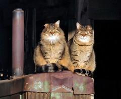 deere cats - 2012: james keefe