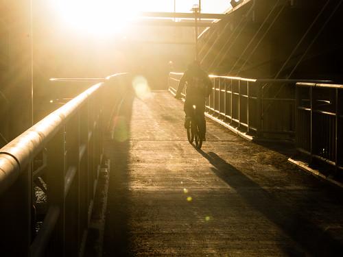 sunset bicyclist