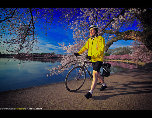 Rite of Spring - Cherry Blossoms in Washington, DC by Sam Antonio Photography