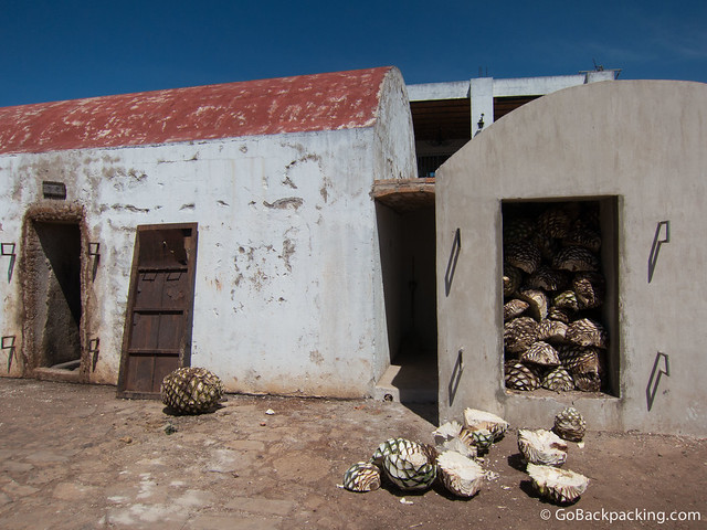"The ""pineapples"" are placed in the ovens for 2-3 days"