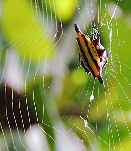 Alien spacecraft caught in a spider's web!