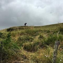 #Cheval #lozère #randonnée #mignon #grandrieu