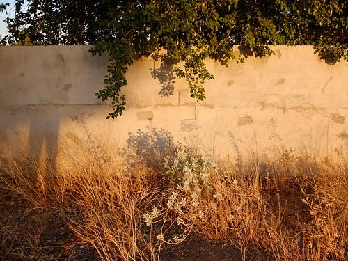 sunset arizona usa selfportrait phoenix silhouette wall weeds autoretrato 2012 selfie ravengolfclub blinkingcharlie fujifilmx10 s32ndstreet